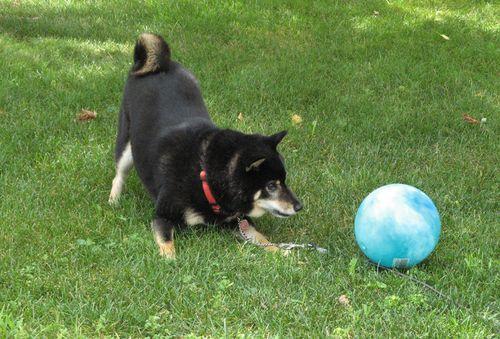 Nik-attack-blue-ball
