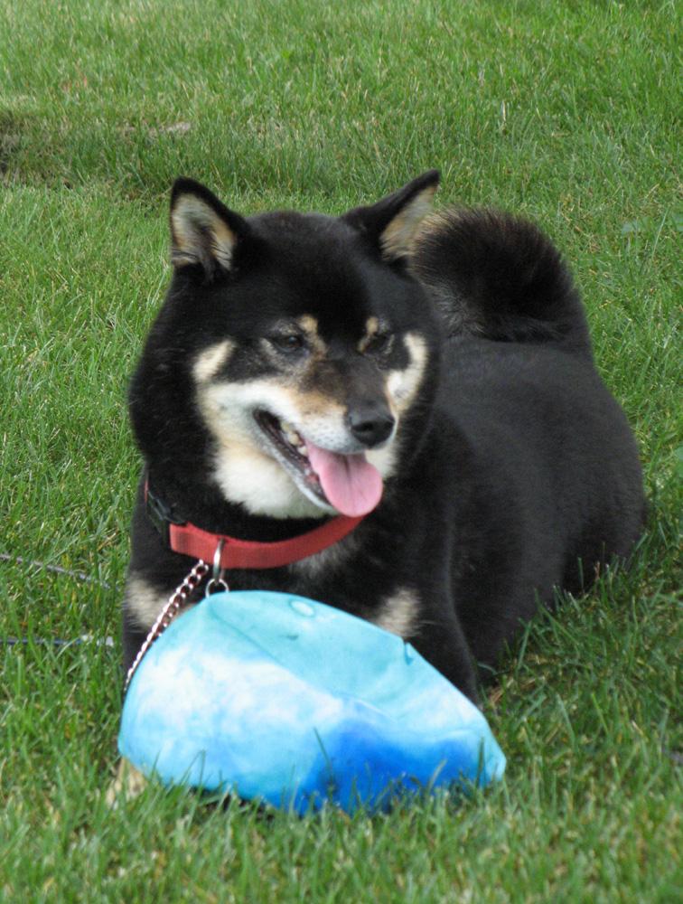 Nik-flat-ball1