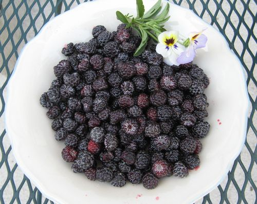 Black-caps-bowl
